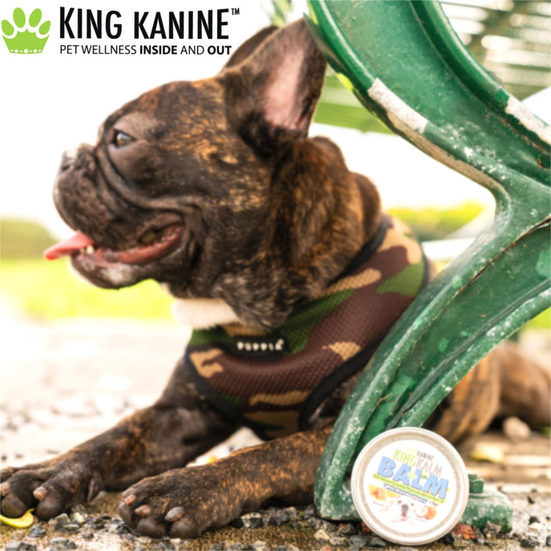 Organic CBD products for pets available, bringing joy to families nationwide as we help them keep their four-legged members healthy and happy. King Kanine helps raise funds and awareness for the ASPCA #community #Pethealth #CBD  >>  https://t.co/FRJ90K9Esc https://t.co/GvyiuHJ6Yt