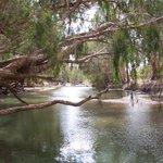 #biodiversity2020 Month Day 27. Here's the beautiful  Burdekin River. @AusLandcare @QldEnvironment @envirogov @WildlifeAust @WildlifeQLD