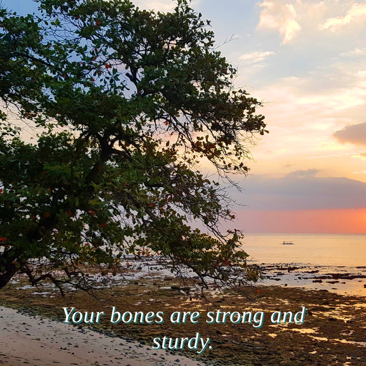 Your bones are strong and sturdy.  🌲Follow for daily affirmation photos and more🌲 🌲@leaftreeaffirmations🌲  #leaftree #leaftreeaffirmations #photo_forest_gold #treehugger #lonely_tree_love #treelover #naturediversity #writersofinstagram #positivethoughts https://t.co/nSVbd8a9ZX