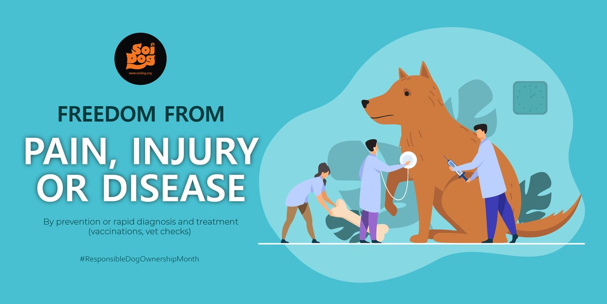 All animals deserve to be free from pain, injury or diseases. Important factors include ensuring the following: ✅provide proper & timely veterinary care. ✅rabies vaccine as well as vaccine to protect them against a variety of viruses & diseases. ✅spay/neuter   #animalwelfare https://t.co/qvaRuJoC9V