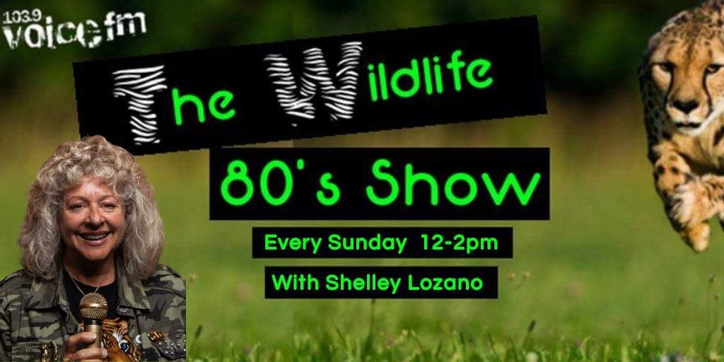 🐾🐾Join @shelleylozano today 12-2pm  on the #WildlifeShow for the best chill out tunes, world wildlife news, animal features and Elephant facts.🐘🐘 https://t.co/jbZWLLRGl3