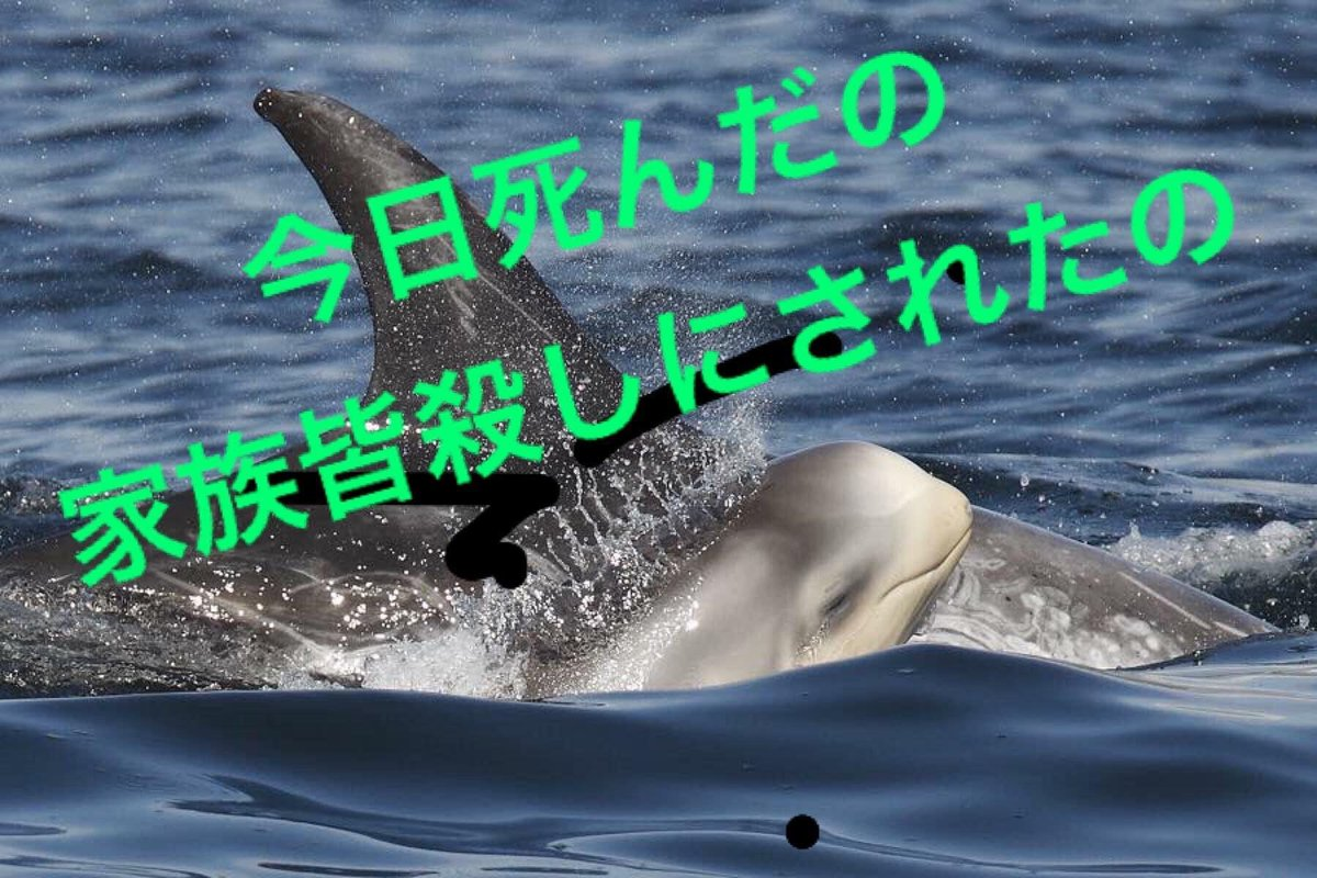 1/2 RISSO'S DOLPHINS BRUTALLY HARASSED TOWARDS THE COVE  今朝、ハナゴンドウクジラの小さな家族が襲われて 全員の死亡が確認されました。 凶器は鋭利な刃物と見られています。 September 27, 2020  #DolphinProject #LIA #TaijiWetMarket  https://t.co/6xKbjIntz9  https://t.co/vG3K96DtX3 https://t.co/Ahq3ixosVh