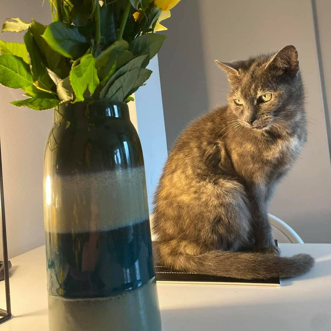 16 year old Maise/Maisie has been #Missing for 2 days in Florence Street, Moncriette Street, Kinnerly Street #Chuckery #Walsall #WS1 area. Please can locals check sheds and another place she may be hiding in your garden.  https://t.co/Gcc64JHshC  #lostcat #westmidlands https://t.co/P10k3pR9Pg