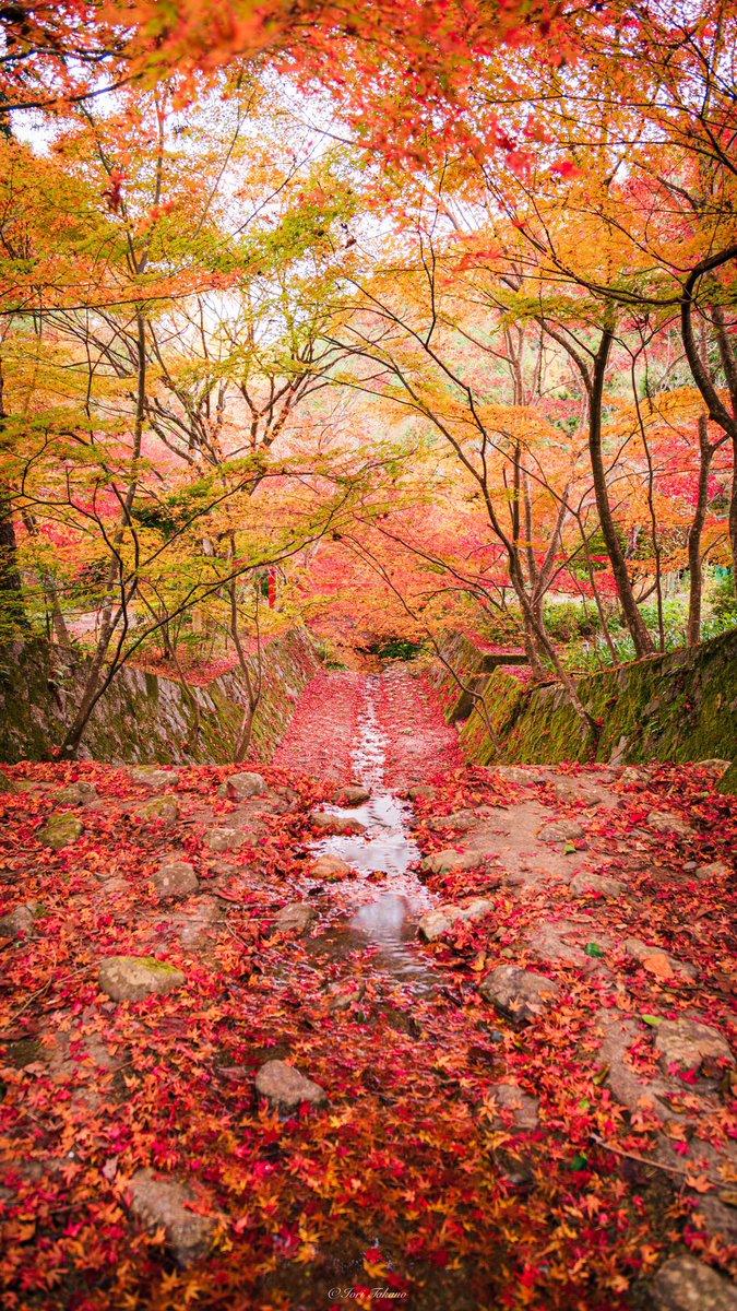 タップお願いします。紅葉の楽園が広がります🍁