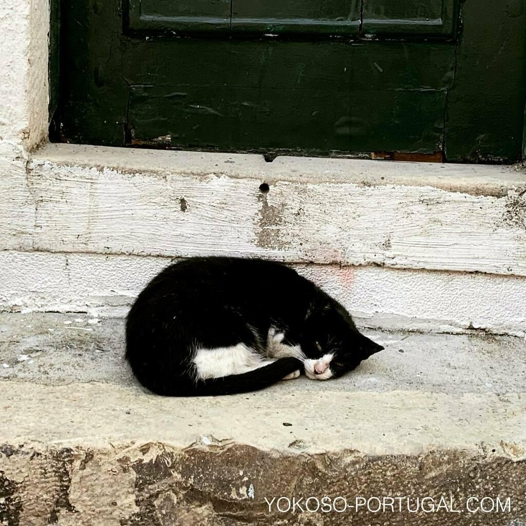 test ツイッターメディア - リスボン、ドアの前で寝てるネコ。#ネコ #リスボン #ポルトガル https://t.co/sDf3u0NdVU