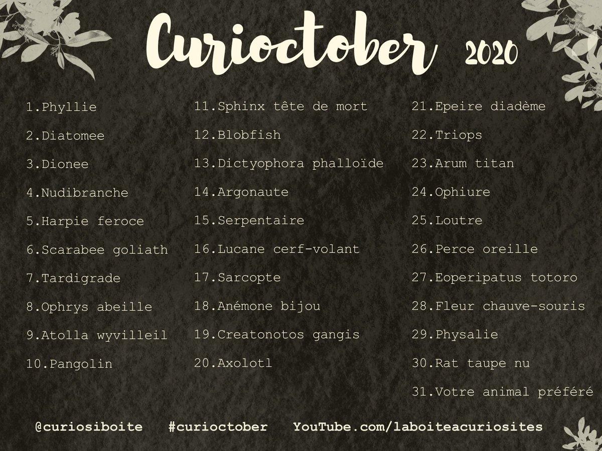 ✨CURIOCTOBER ! Je vous ai concocté une version curiosités naturelles du fameux @inktober : plantes, animaux, un vrai cabinet de curiosités à dessiner tout le mois d'octobre ! N'hésitez pas à partager, me taguer sur vos créations et à utiliser le hashtag #curioctober ! Hâte ! https://t.co/vvGVwOwHqG