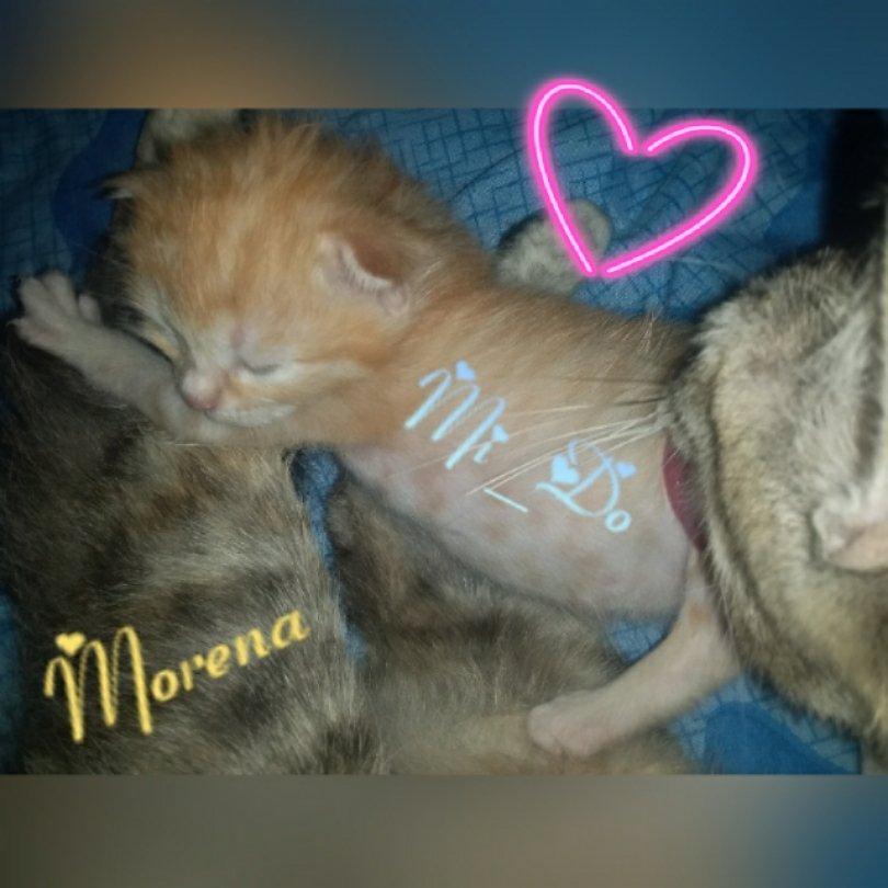 Y nació  el amor mas Grande del planeta. 😍🐈🐾🐾 Mi_Do #loveCat  #gatos https://t.co/v8cqX163D3