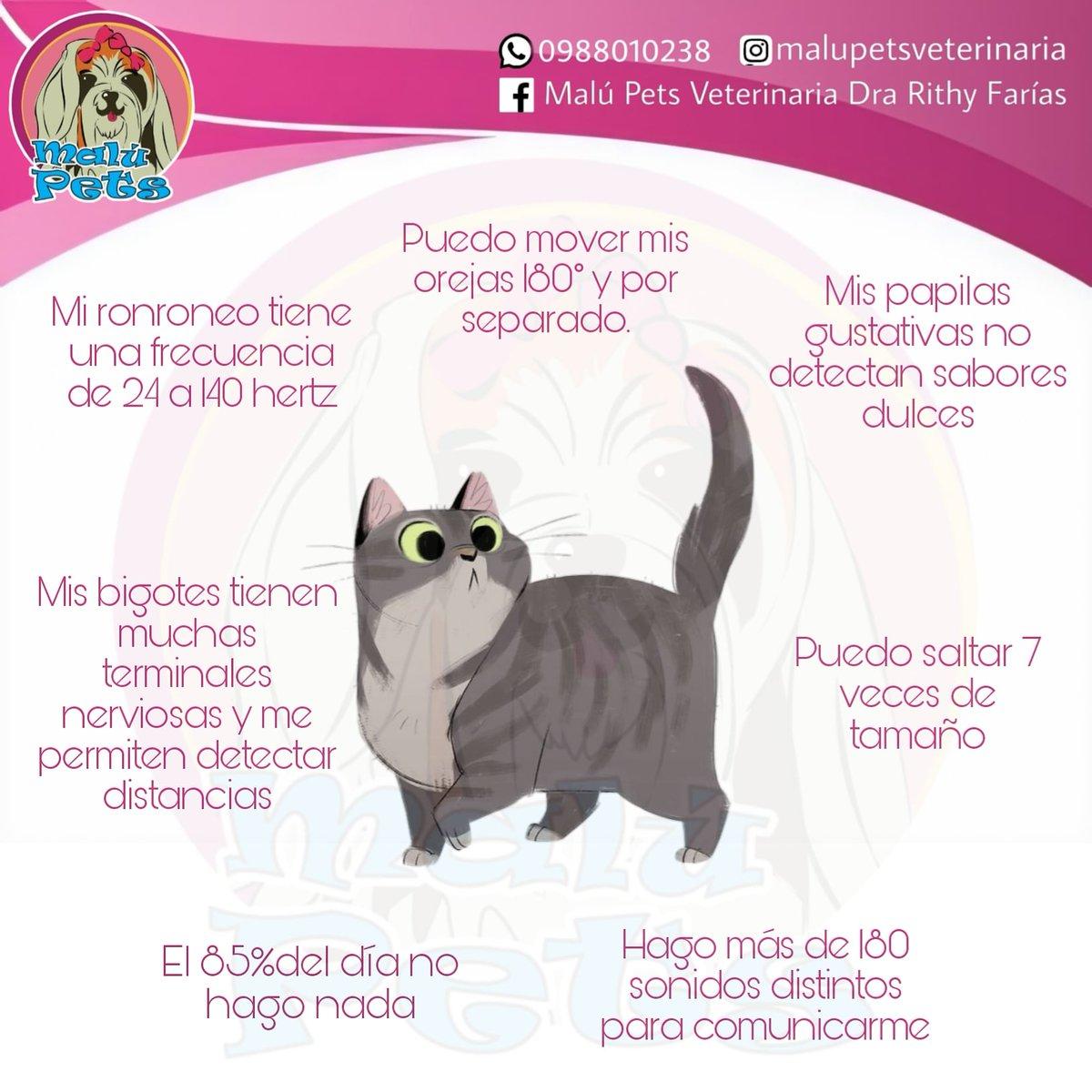Datos curiosos sobre los gatitos 🐱❤️ . . . . . . . #fotodeldia #gatos #datoscuriosos #Ecuador #Portoviejo #DraRithaFarias #veterinaria https://t.co/9YgLpmaTmo