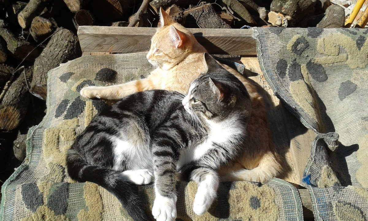 A los gatos les encanta tomar el sol, y deberíamos aprender, hay que salir y tomar un poco de su fuerza, eso sí, con mucho cuidado.  #gatos #NuevaNormalidad #cuidarse https://t.co/Gemf7yShvT