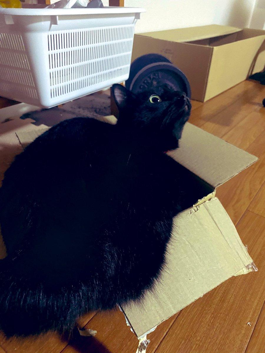 こんばんワークアウト🌕  今日は腹筋と腕の日💪  休みだしたくさん寝よ😪 おやすみなさい🐈 #黒猫と筋トレ #にゃんこ #家トレ #宅トレ #筋肉もりもりなりたい #減量の冬 #冬毛のトレーナー https://t.co/2XSAiFi6N7