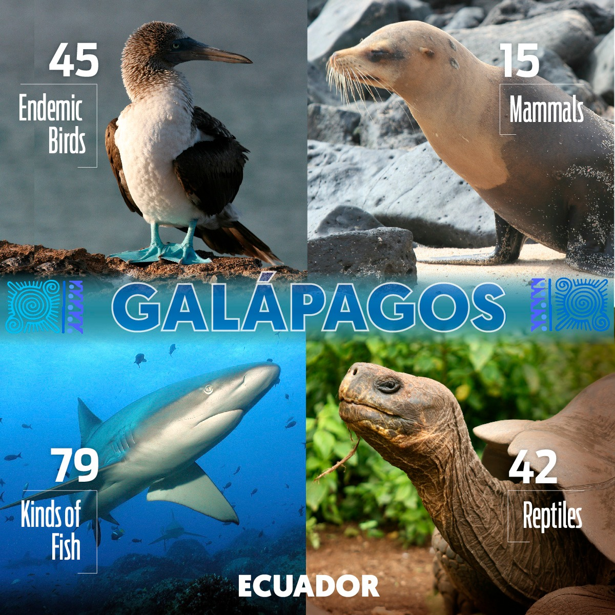 On the International Tourism Day we celebrate all the biodiversity we found in the Galapagos Islands! We are ready to give you the best life experience in Darwin's evolution cradle. #VisitEcuador #WorldHeritage #Beach https://t.co/tkN4c9ZkJV
