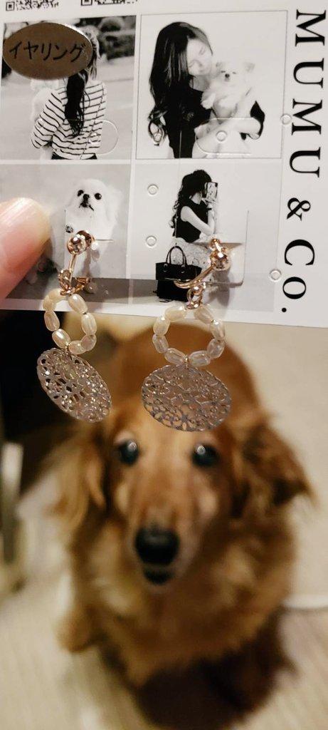 ムムさんのイヤリング買ってきてくれた~✨昨日しまむら行けなかったから無いかな~って思ってたけどあったみたい😊💕ネックレスは売り切れ~😭買ってきてくれてありがとう💗💗💗#mumu #しまむら #しまパト #しまむら購入品
