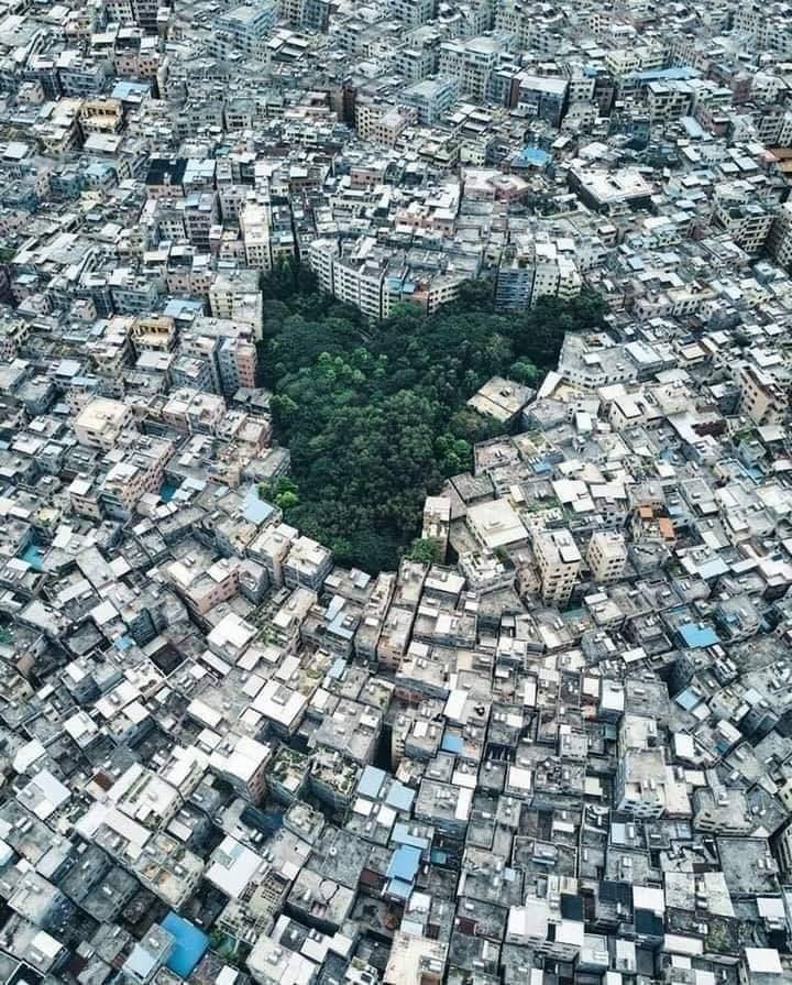 तस्वीर कह रही है प्रकृति लड़ाई हार रही है, लेकिन सच तो ये है, इंसान हार रहा है...!!! 😔 👇👇