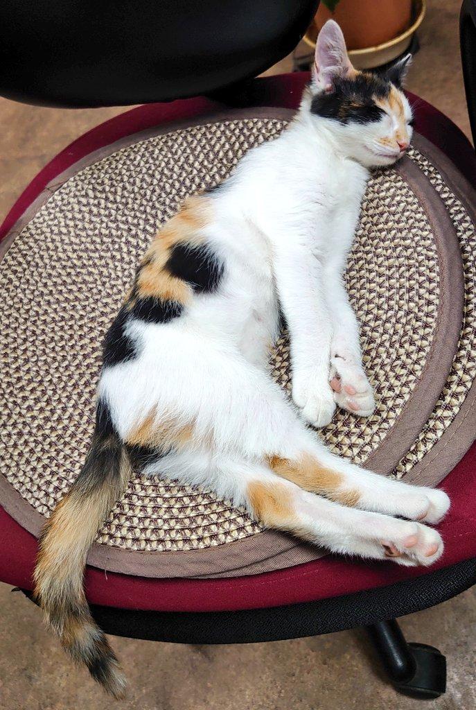 寝相が可愛すぎて悶絶  #三毛猫 #寝相 #チビミケ #猫好きさんと繋がりたい  #猫のいる暮らし https://t.co/oeacM5QxI9
