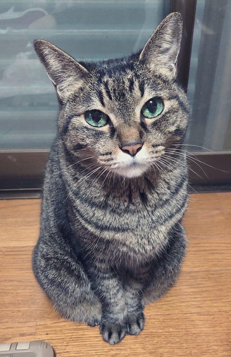 猫がもう10分ぐらい真横で私を見つめ続けたまま動かないので何してほしいん?て聞いても目を細めてニコ…ニコ…するだけなのでお前が可愛い事しか分からない