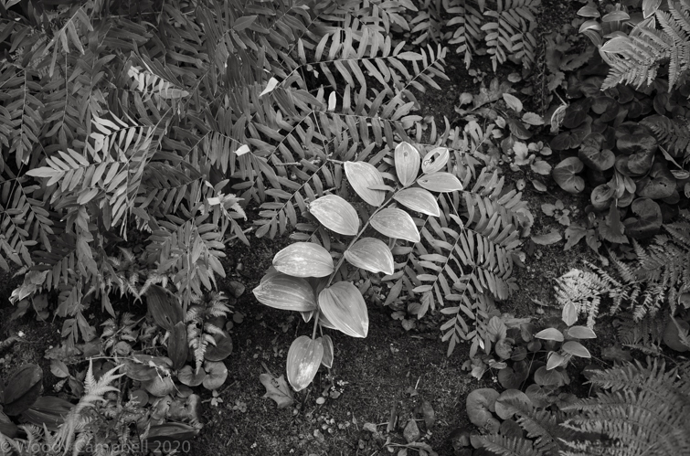 Now.  Warren CT.   Day 3958 of one photograph every day for the rest of my life.  #BlackAndWhite #BNW #Photo #Monochrome #DailyPhoto #Leica #Monochrom #LiitchfieldCounty #CT https://t.co/eS6uO80xUL
