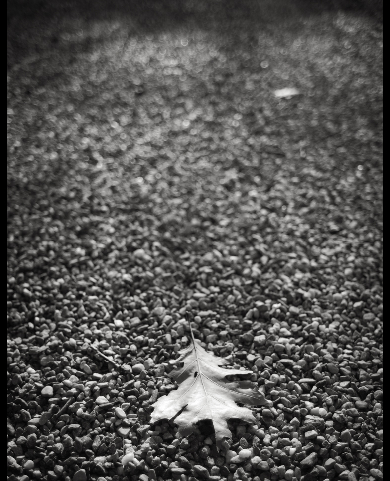 Now.  Warren CT.   Day 3958 of one photograph every day for the rest of my life.  Autumn is about to happen.  #BlackAndWhite #BNW #Photo #Monochrome #DailyPhoto #Leica #Monochrom #LiitchfieldCounty #CT https://t.co/Gm2HljcIoA