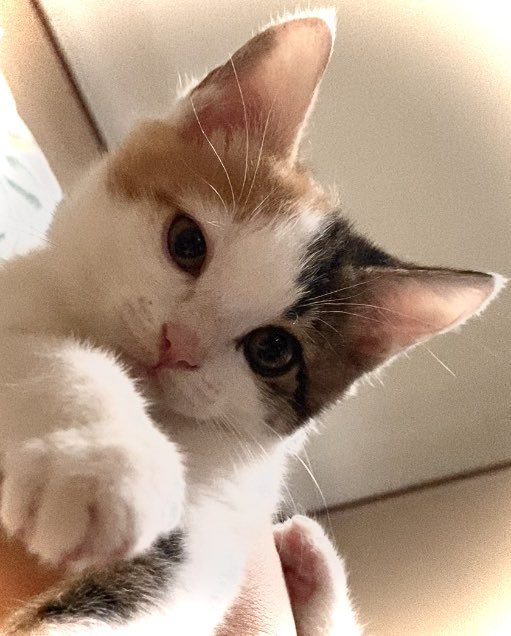 今日も1日お疲れにゃ⭐️  #三毛猫 #子猫 #おやすみ #猫好きさんと繋がりたい https://t.co/YkJJS3GISE