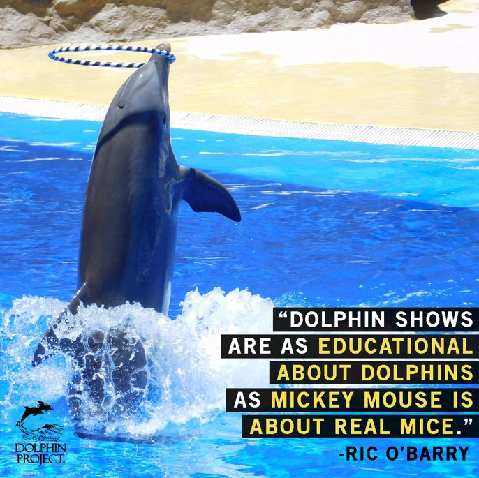 Zeg NEE tegen de dolfijnenshow in gevangenschap! Verdiep je in gevangenschapsproblemen en help het woord te verspreiden:https://t.co/1kcsNrDx3h #DolphinProject #DontBuyATicket https://t.co/TNZt3JQV2K