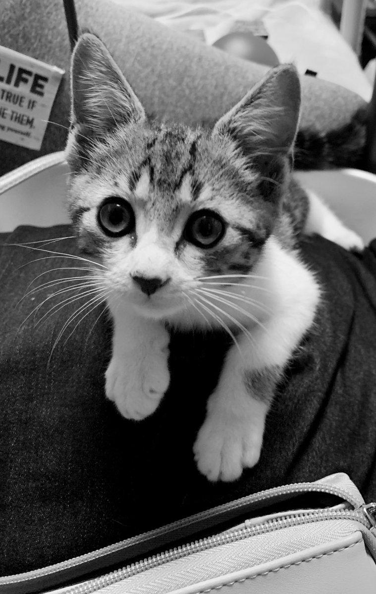 野良出身なのに警戒心なしฅ•ω•ฅニャニャーン✧寂しくなると抱っこおねだり…ぐるにゃんぐるにゃんゴロゴロゴロ…あれ??猫ちゃんってこんな甘えたなの?かわゆすぎるんですけど!  母が羨ましい…私も猫ちゃんほすぃ  #にゃんこ #猫最高かよ https://t.co/29vzlTQ9g0