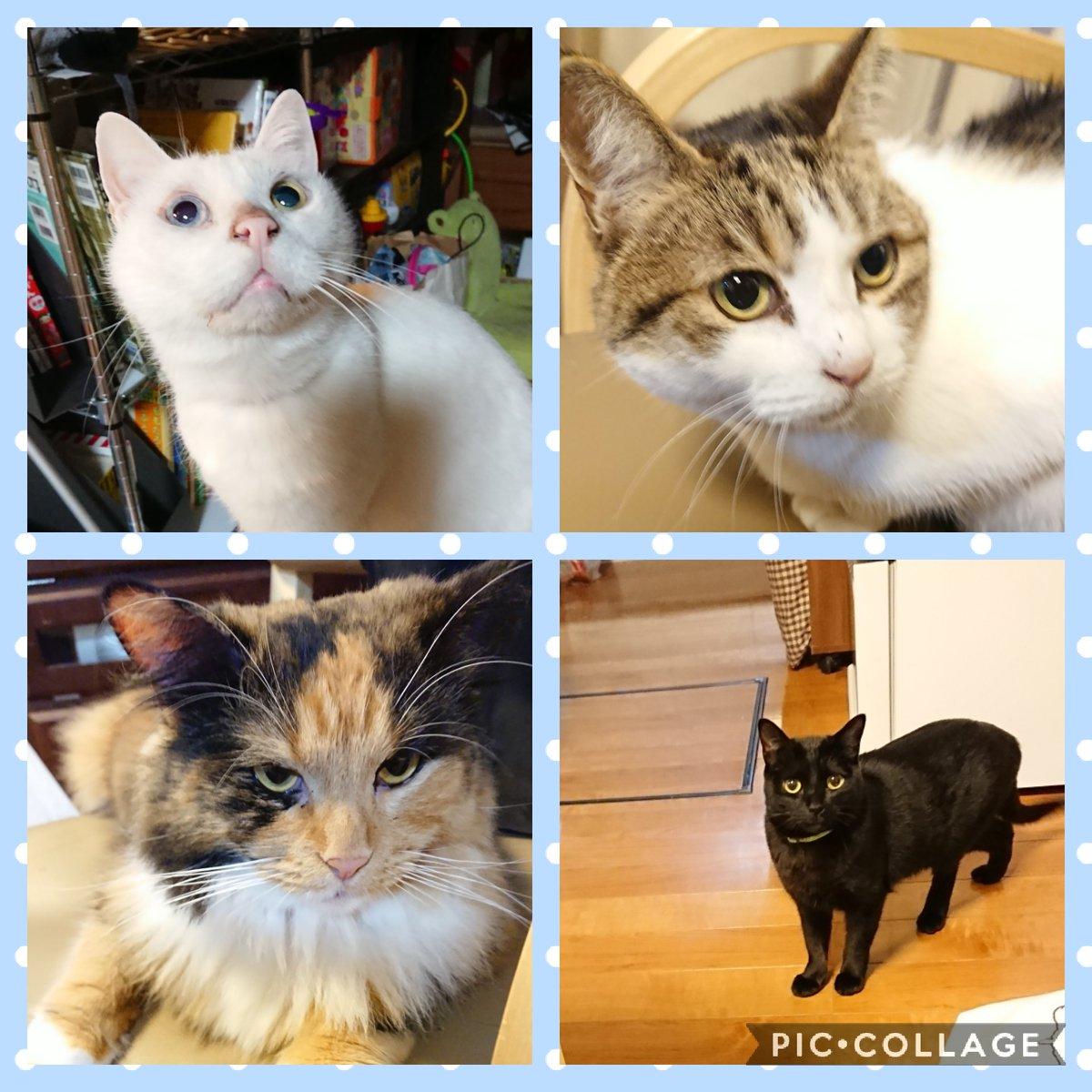 うちのにゃんこです🐱 Instagramでも紹介してます😊  #猫好きさんと繋がりたい #保護猫 #野良猫 #にゃんこ #一匹だけ #ノルウェージャン #動物好き #幸せを #届けたい #cat #catlove #トリミングサロンAndante #横浜 #トリミング https://t.co/RnH08dVdPa