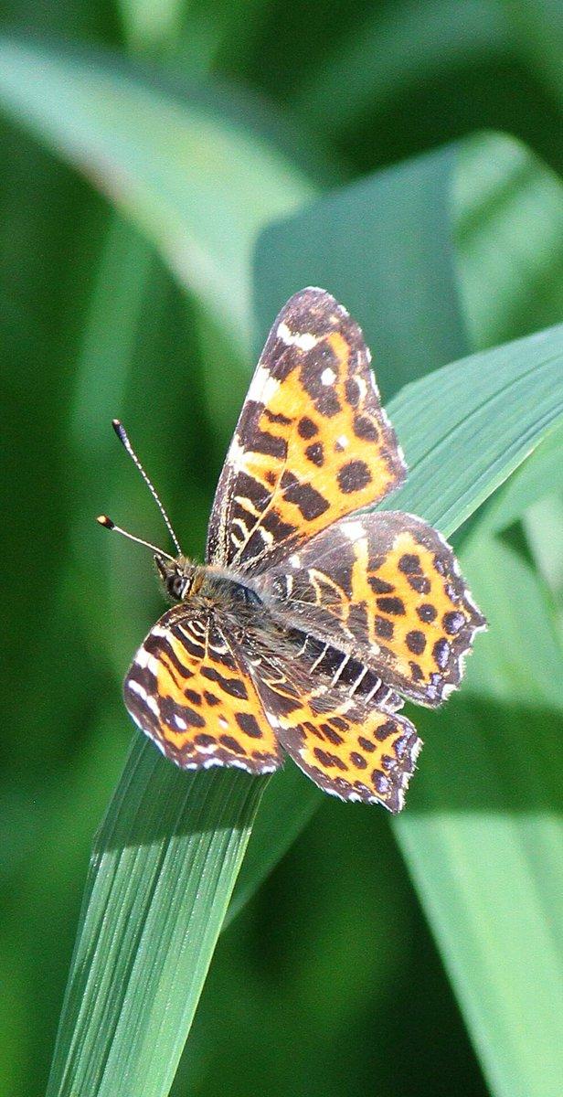#лето #жуки #долгоносик #паук #бабочка #butterfly #Spyder #summer #NaturePhotography https://t.co/9BAbKO4mRt