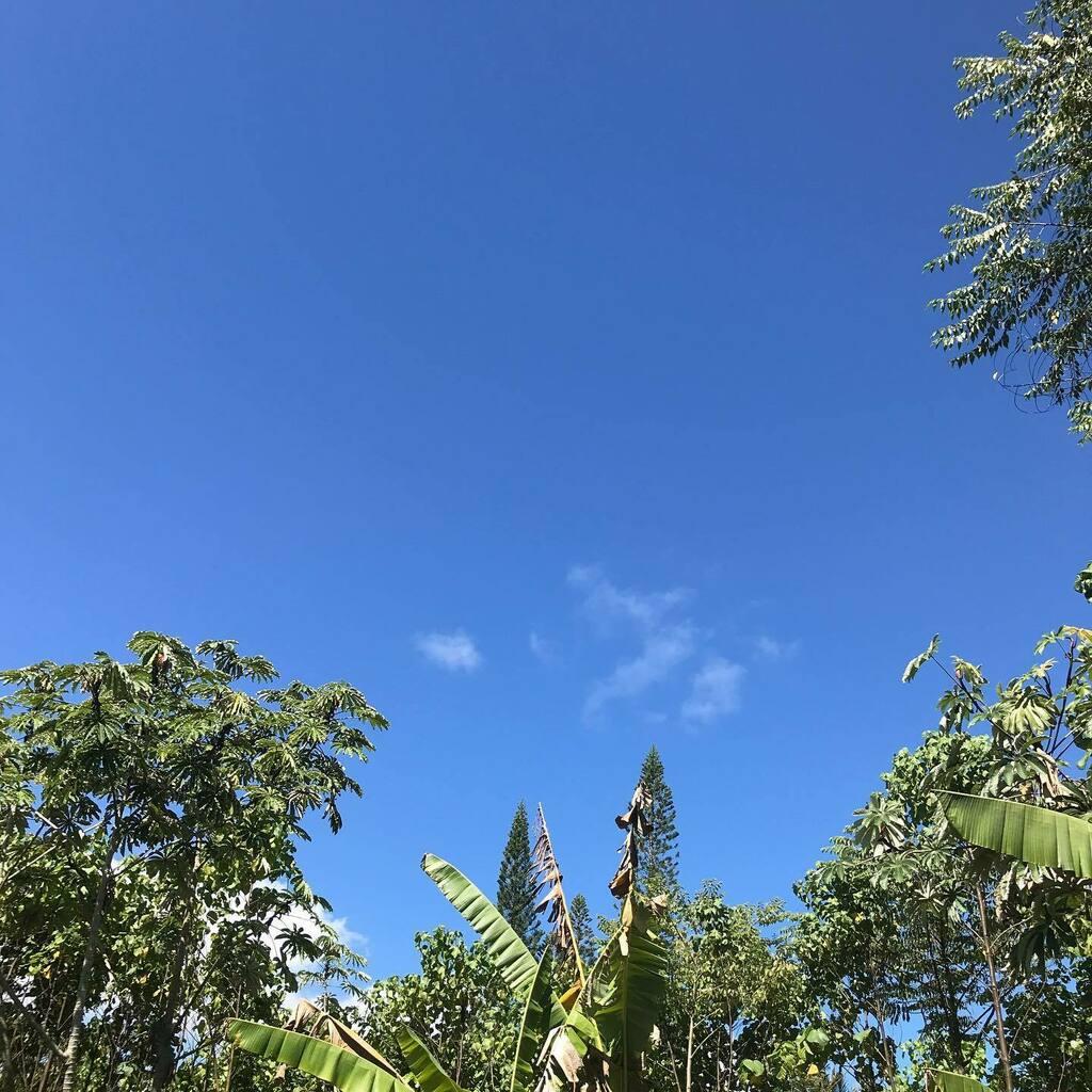 9/27/20 28℃ 日曜日の朝 #aloha #ハワイ #ハワイ島 #ハワイ暮らし #朝空 #空 #イマソラ #hawaii #bigisland #hawaiilife #morningsky #sky #skygram #ig_hawaii #instasky https://t.co/Ggm5GAiUwT https://t.co/E7NNKXOHKC