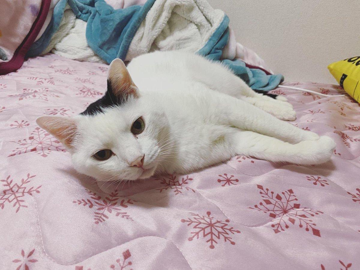 寝るとこ無い🤔  #私の目線 #尊い #だいちゅき #定期ツイート #ハート猫 #猫が好きすぎて辛い #猫好きさんと繋がりたい #猫がいる暮らし #拡散希望 #にゃんこ #猫動画 #おもしろ猫 #RTで私を有名にしてください #yummy #pretty #picoftheday #RT #neco #cat #寝る #寝れない #猫との暮らし #猫は家族 https://t.co/wF2De21nlO