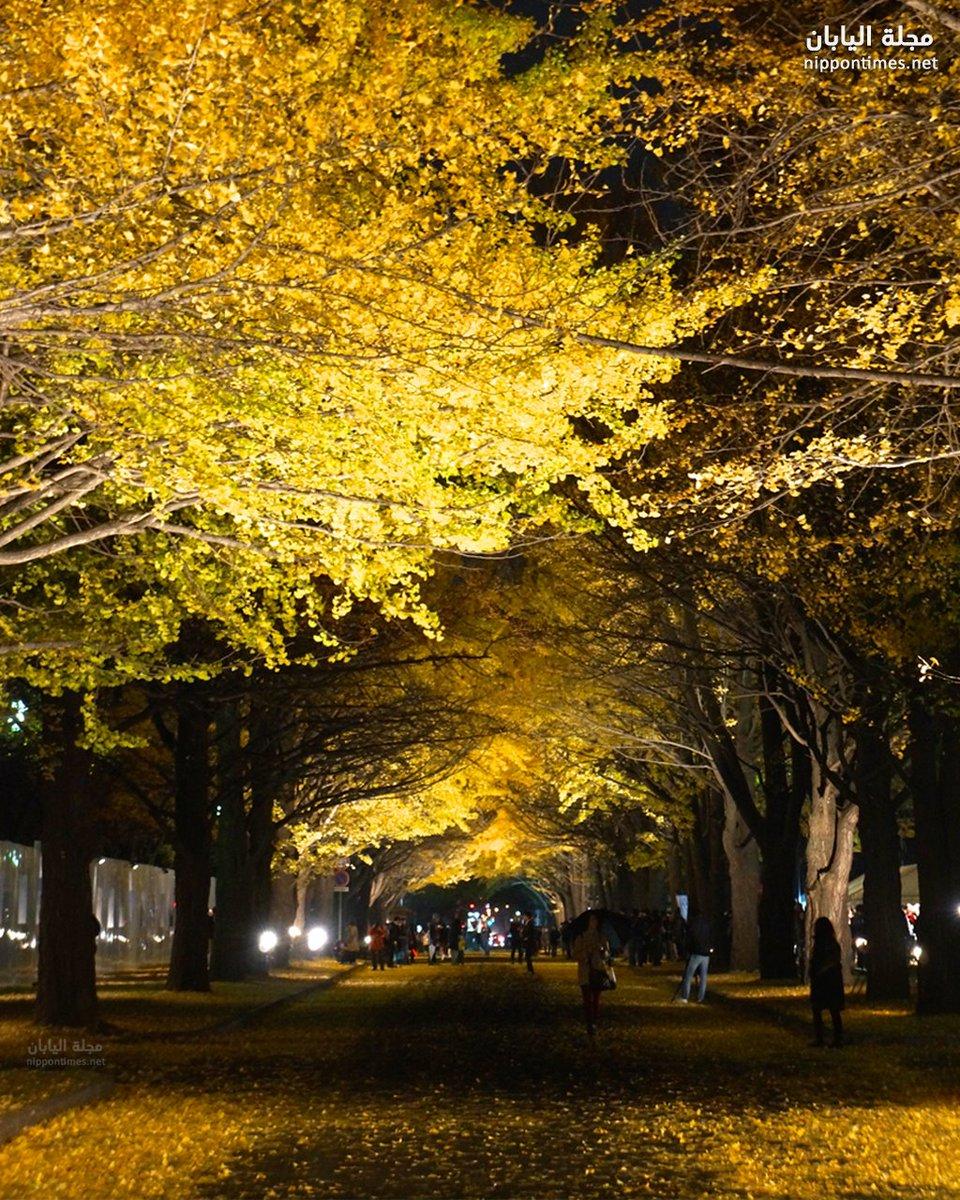 من ذكريات الخريف في سابورو #اليابان #مساء_الخير  📷 Kentaro Ohno https://t.co/RxHXkS3ZzY