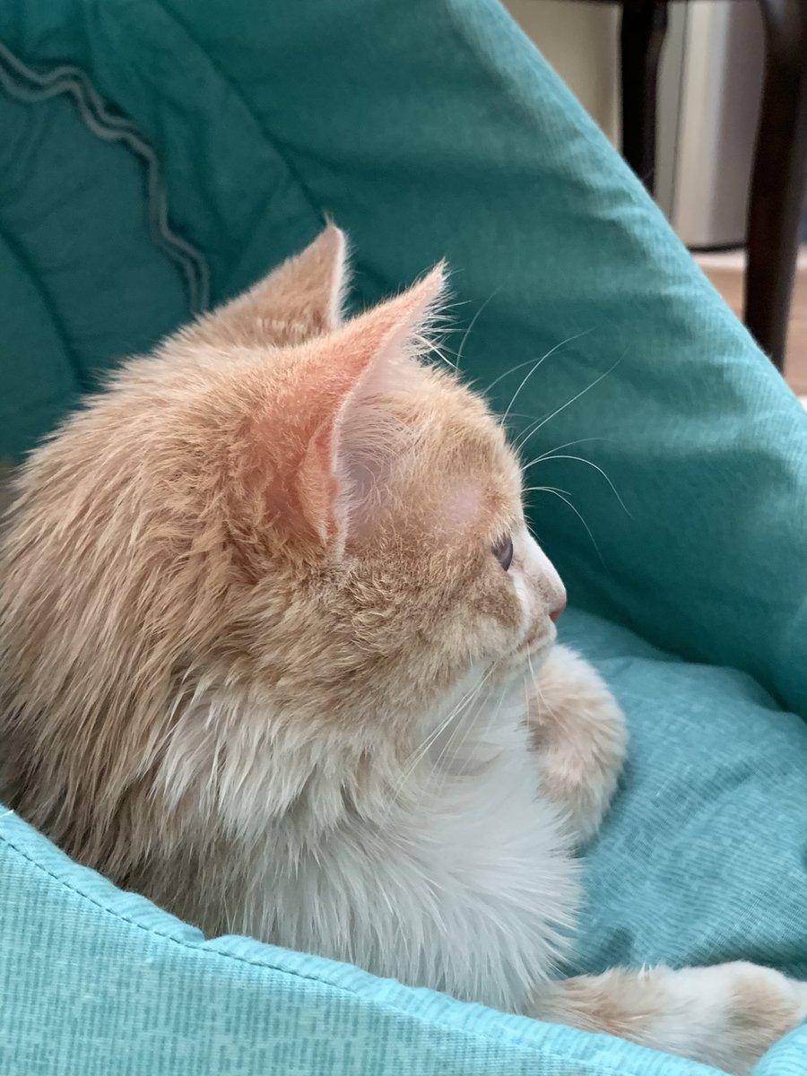 @Dreamy0107 #CatsOfTwitter #friyay #Caturday #cats #catoftheday #catsrule #gatos  #catoftheweek #catvideos #kittyloafmonday #catlife #whiskerswednesday #cutecats #purrsday #FluffyFursday #SundayFunday #jellybellyfriday #toebeantuesday https://t.co/LaL9l7Gx2W