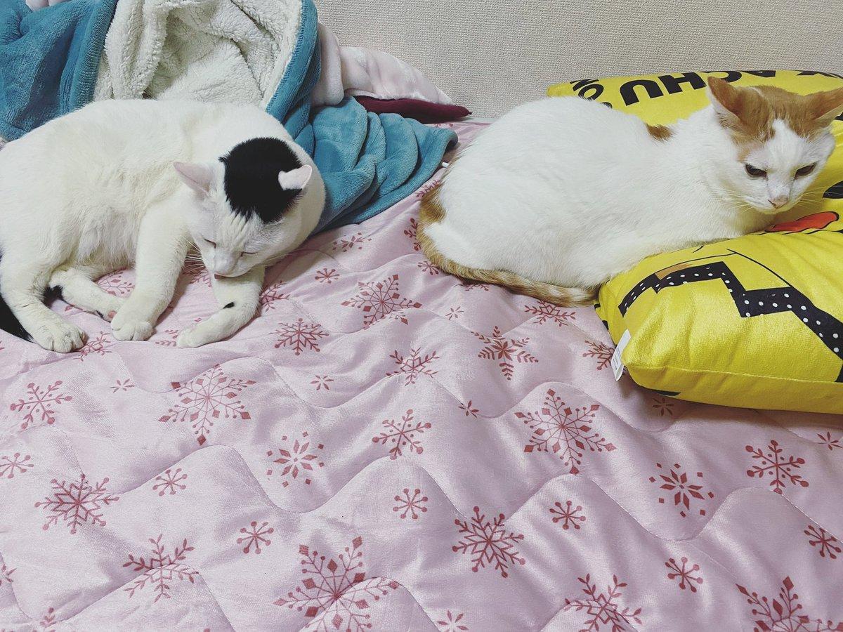 もっと寝るとこない💦  #私の目線 #尊い #だいちゅき #定期ツイート #ハート猫 #猫が好きすぎて辛い #猫好きさんと繋がりたい #猫がいる暮らし #拡散希望 #にゃんこ #猫動画 #おもしろ猫 #RTで私を有名にしてください #pretty #picoftheday #RT #neco #cat #寝る #寝れない #猫との暮らし #猫は家族 https://t.co/JAo55h7kmA
