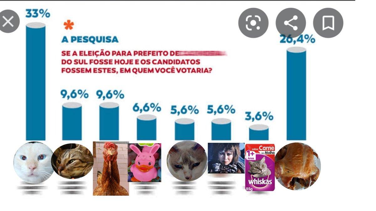 #humor #Eleicoes2020 #gatos https://t.co/w1ZuLwpBtM