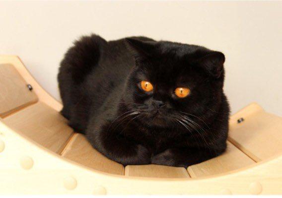@MitsueMitsu #CatsOfTwitter #friyay #Caturday #cats #catoftheday #catsrule #gatos  #catoftheweek #catvideos #kittyloafmonday #catlife #whiskerswednesday #cutecats #purrsday #FluffyFursday #SundayFunday #jellybellyfriday #toebeantuesday https://t.co/NE6stKa2LM
