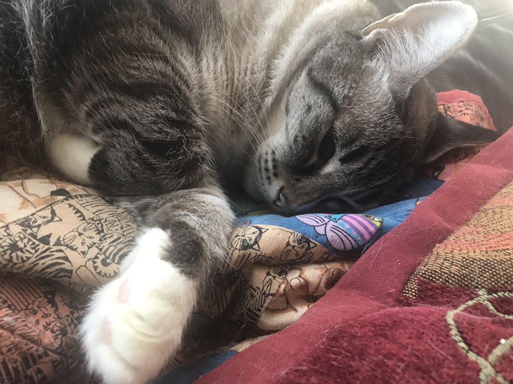 #HelenaJustinaSpam #pet #cat https://t.co/ZxjGPD9nrk