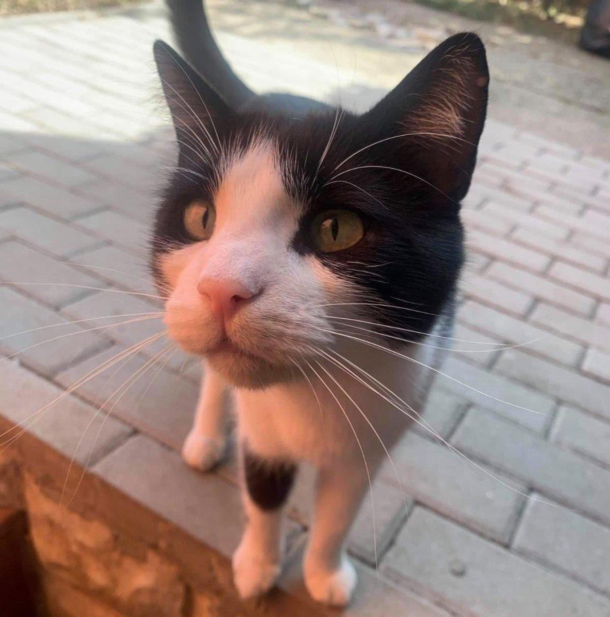 Schenkst du unserem Patrick das Ticket ins #Glück?  Patrick ist eine 2 jährige und immer fröhlicher Bub, der das kuscheln liebt ♥️  #cat #cats #catoftheday #Caturday #catoftheweek #AdoptDontShop #adoptdontbuy #savelife #zuhausegesucht #pet #tierschutz https://t.co/utVC9ZbU07