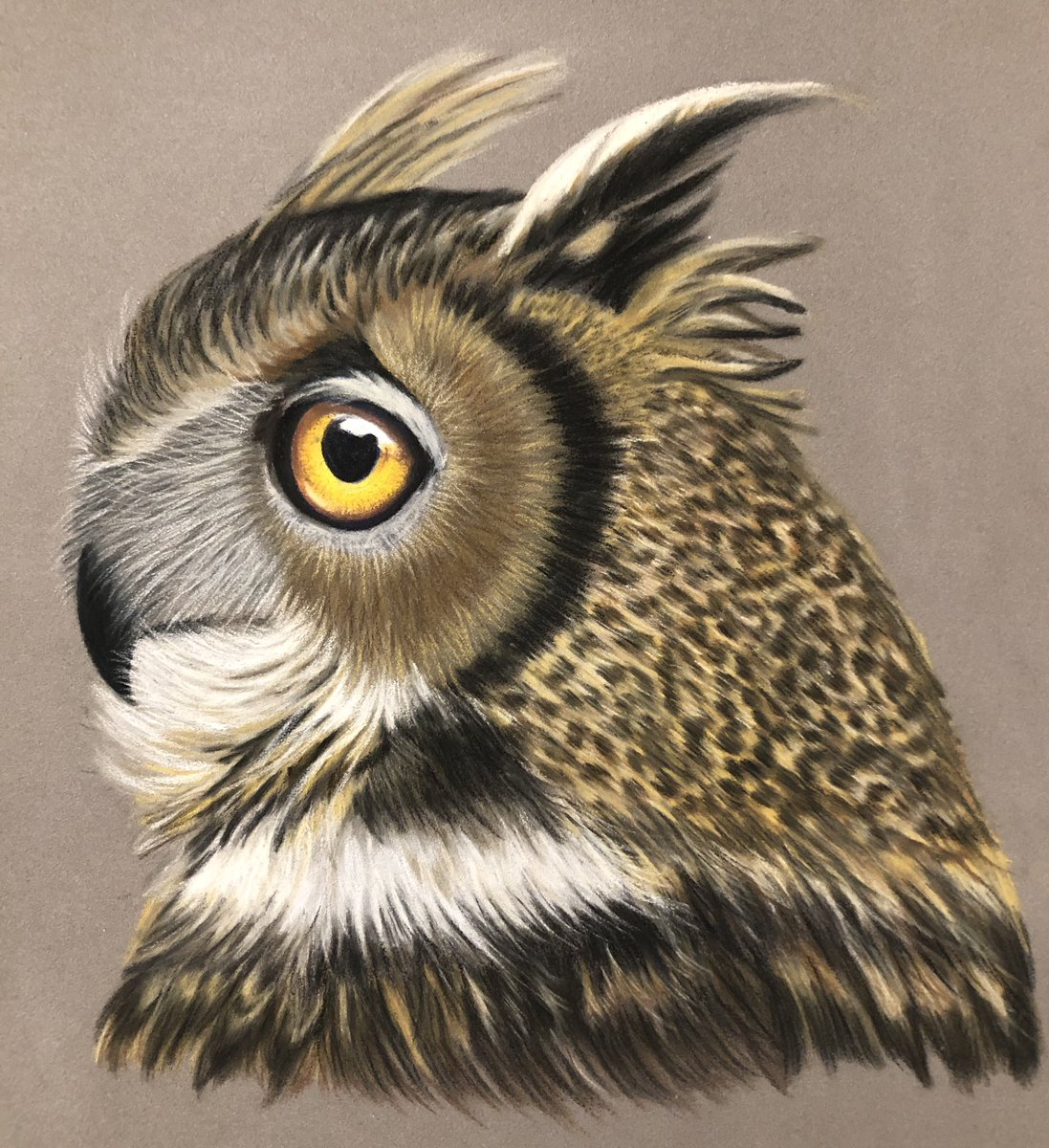It's been a while since I drew an #Owl I enjoyed spending time on this little guy 🦉😃 https://t.co/Bd9TOM93MW