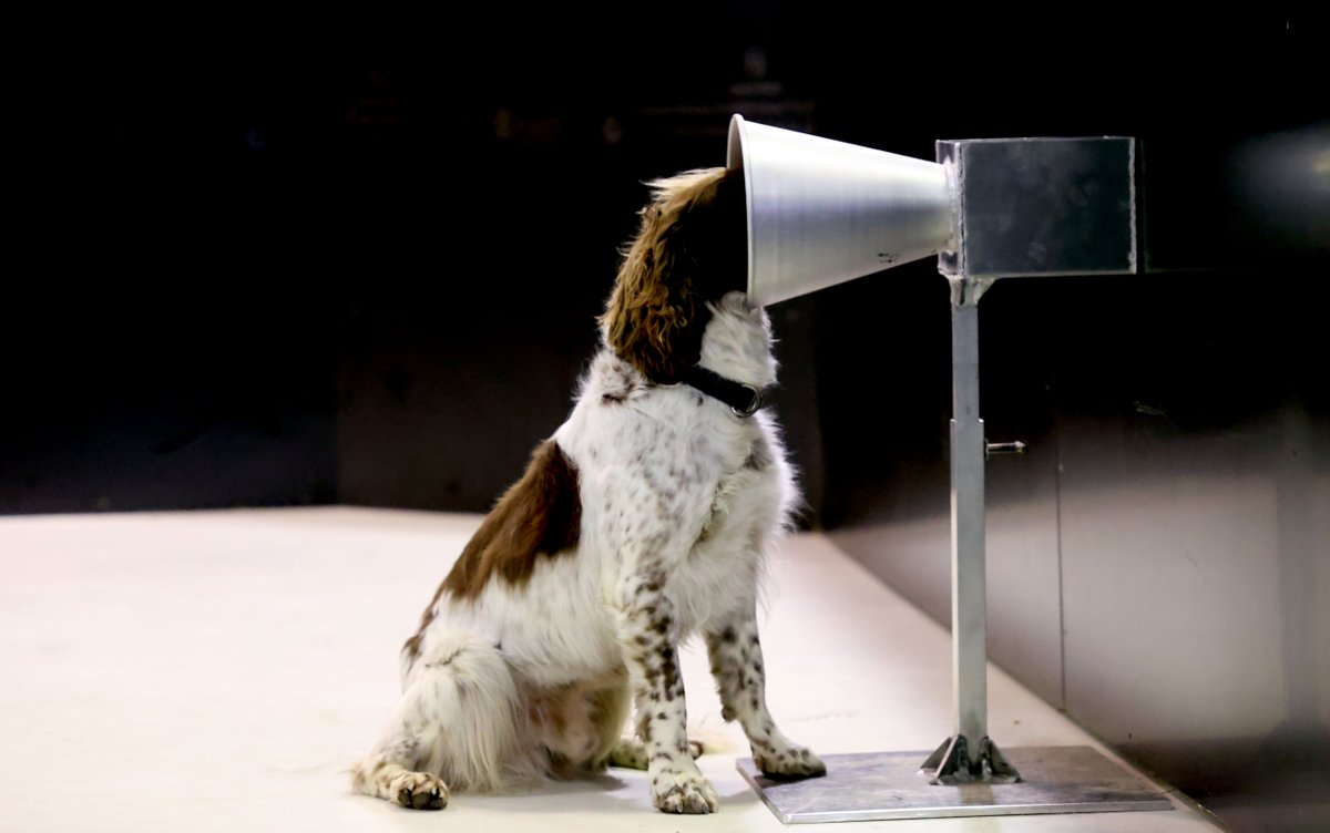 This dog is learning how to detect covid-19.