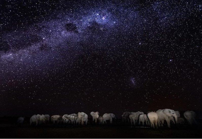 Слоны на водопое под африканским ночным небом и никакого фотошопа #nature #Africa #photography #elephants #amazing https://t.co/tdDiA1BYT8