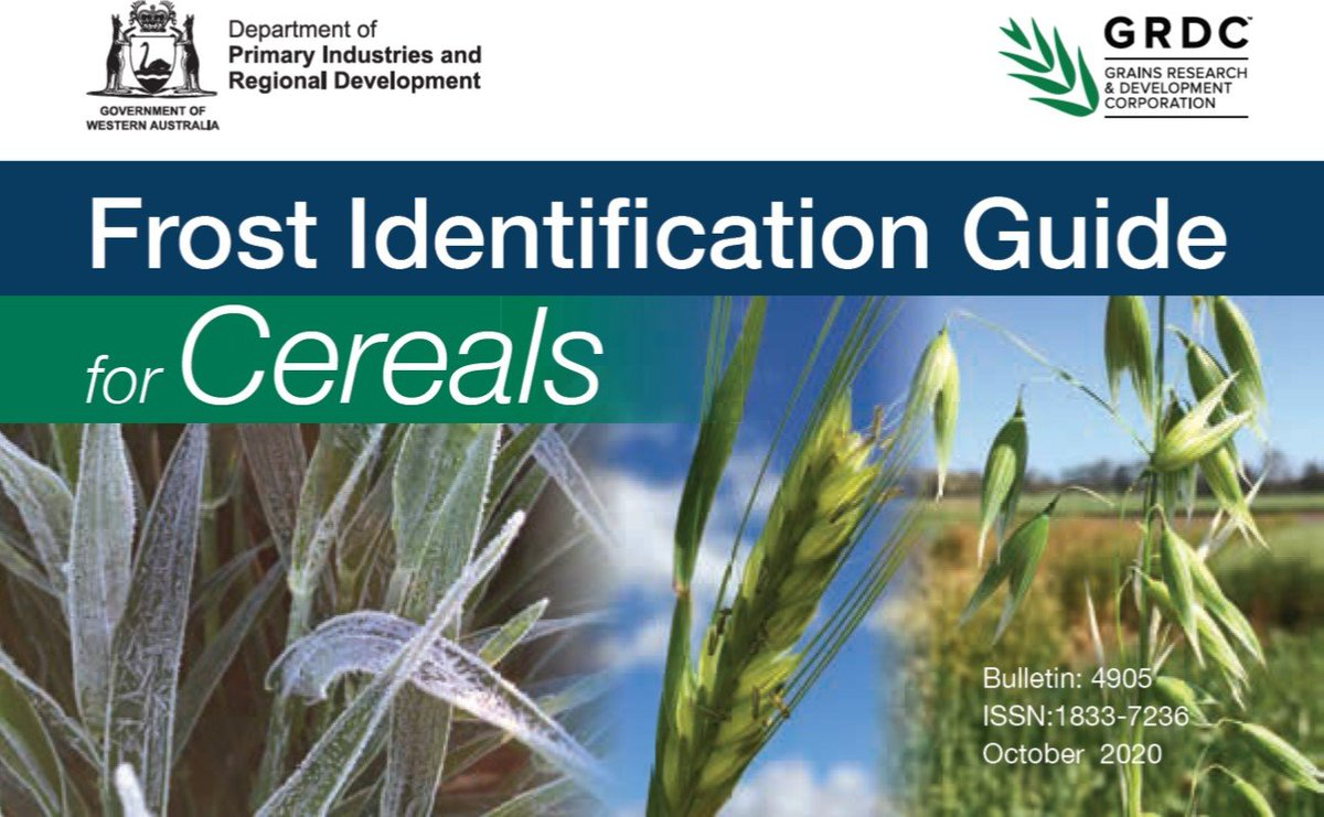 New frost resource launched! The newly released DPIRD Cereals Frost ID guide plus the updated Canola and Pulse Frost ID guide are both available to download from the DPIRD website. Head to the GGA Frost project resources page for both links https://t.co/Jv1jTdWSWO https://t.co/mJYNSwUPWU