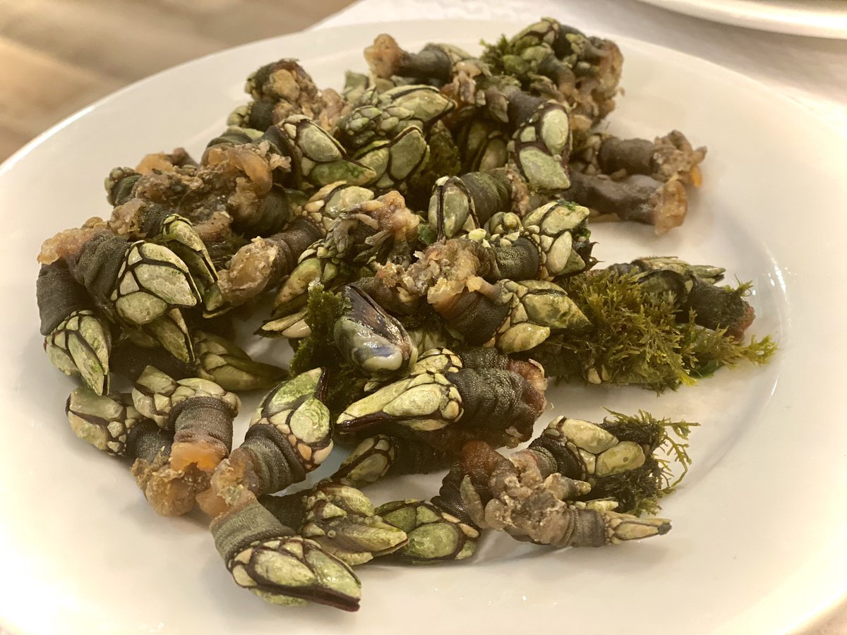 """Gooseneck barnacles, """"Percebes"""" in Portuguese, the real taste of the #sea 😋😋😋 Nothing more delicious (unless you have oysters)...  😋😋❤️ #seafood #Food #PortugueseCuisine #yummy #delicacy https://t.co/4PIVdsueQk"""