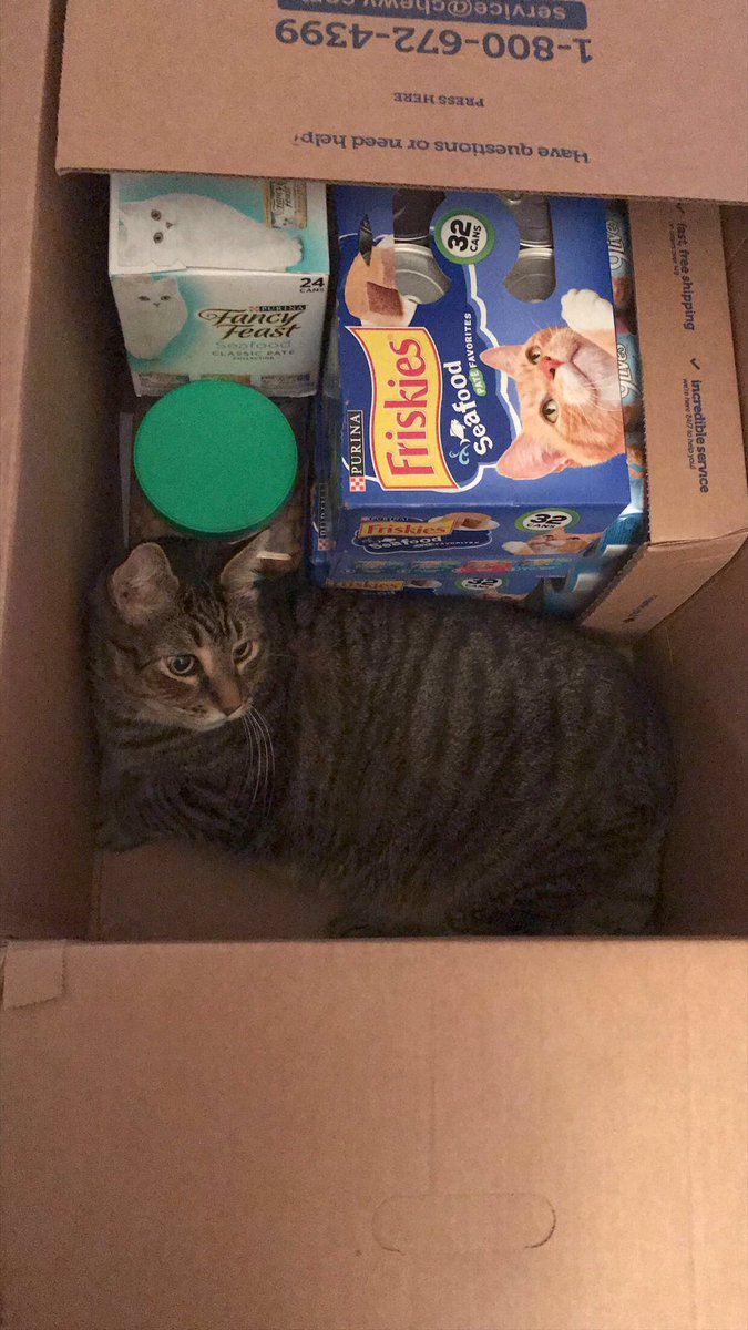 Bubbles checking to make sure the @Chewy order was correct. #Chewy #Cats #CatsOfTwitter https://t.co/Uik2f5Kn1Y