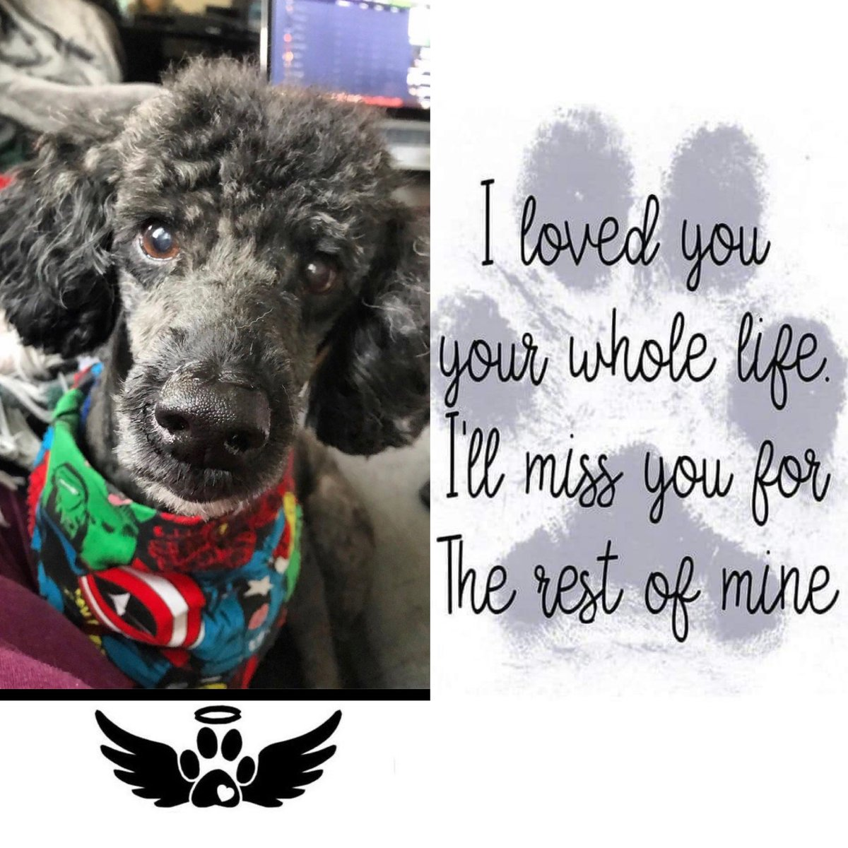 #seasonofmourning for sure 😢😢  RIP our good boy Zorro