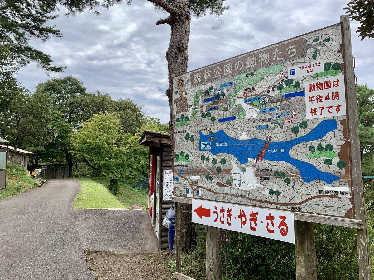 #石川県森林公園 の仔たぬきちゃんたち。 https://t.co/FGXYJfhSNo