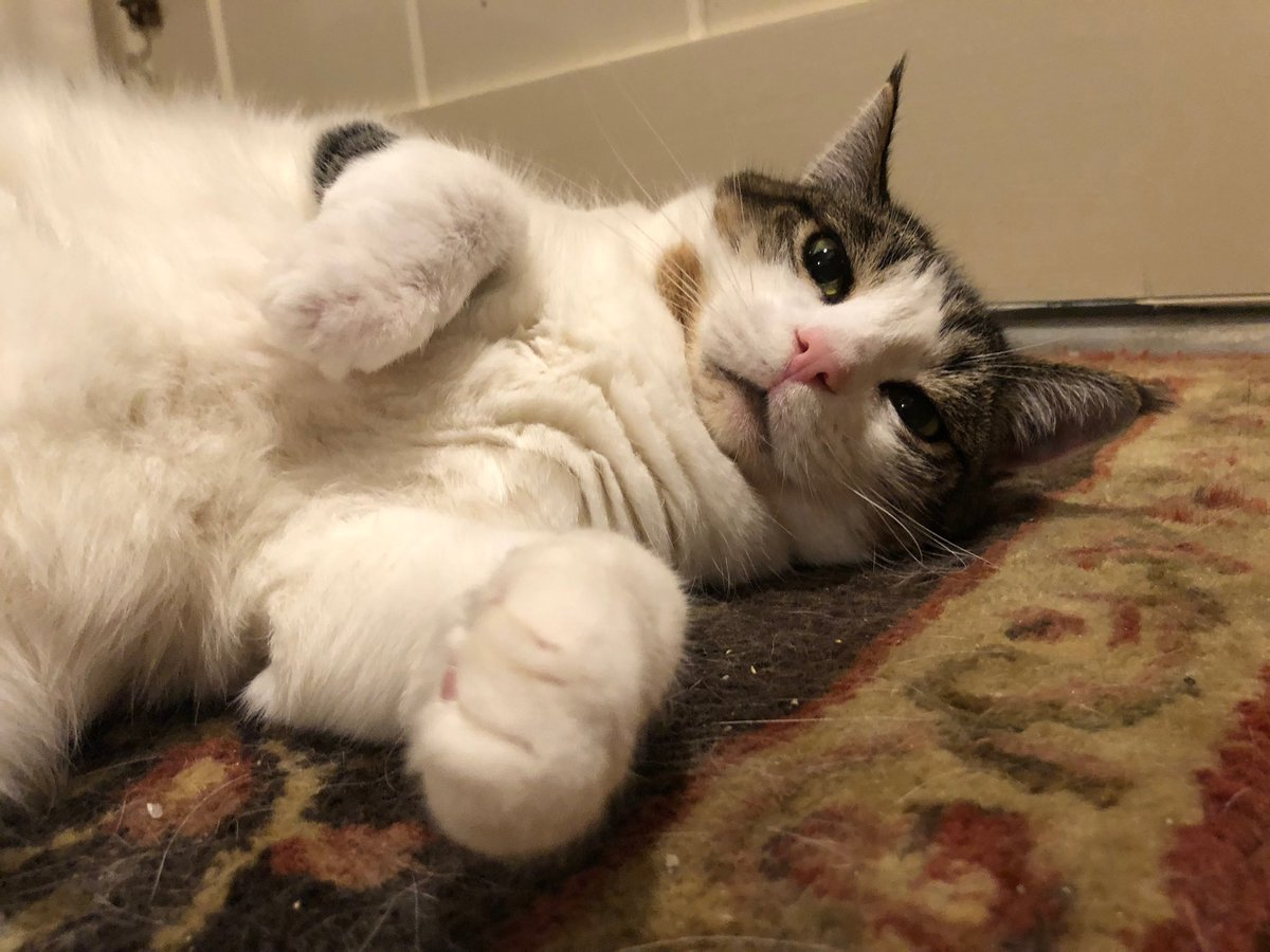 I am a believer in climate change, Oxford commas, and tasty treats.  #CatsOfTwitter https://t.co/5UpiGpkLLZ