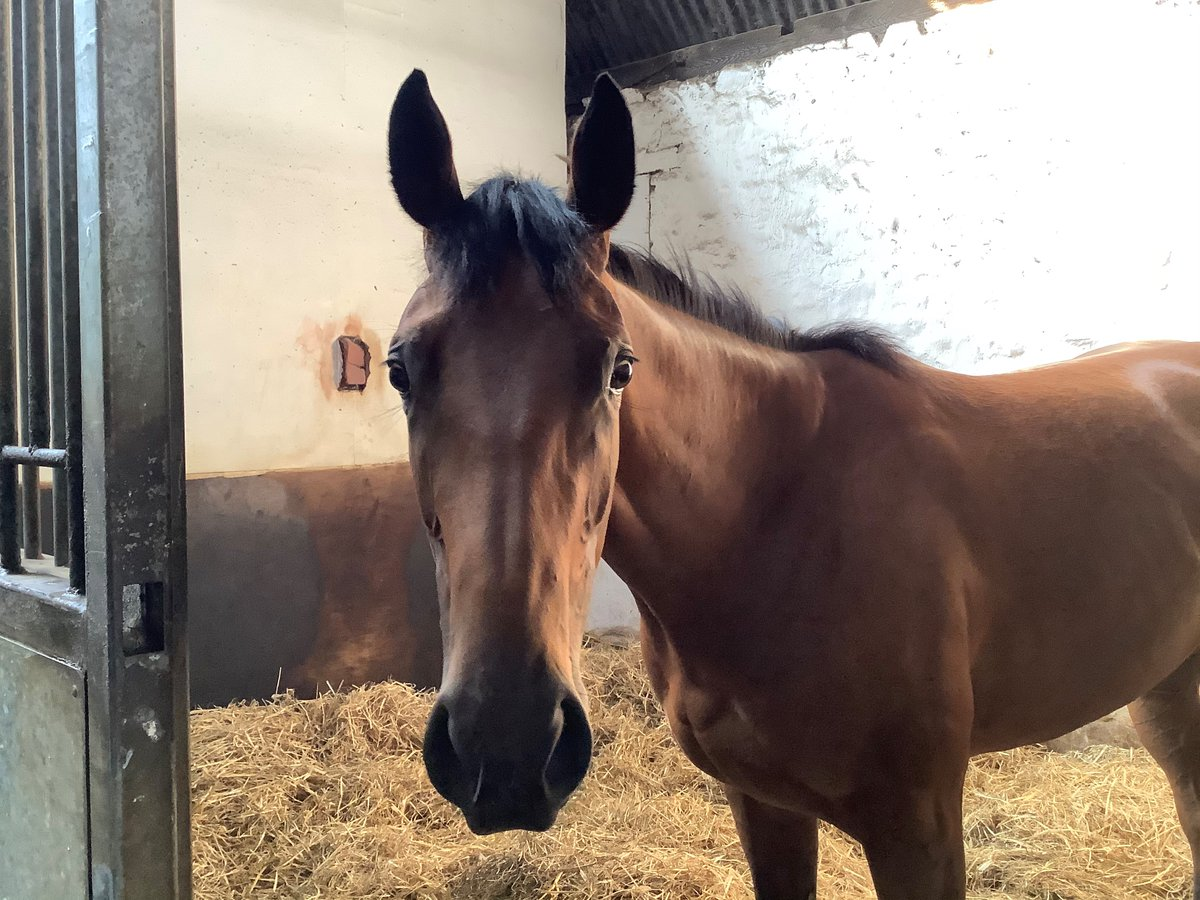 Two runners today, both at @Beverley_Races. Good luck to the connections of Aquamas and El Naseri.