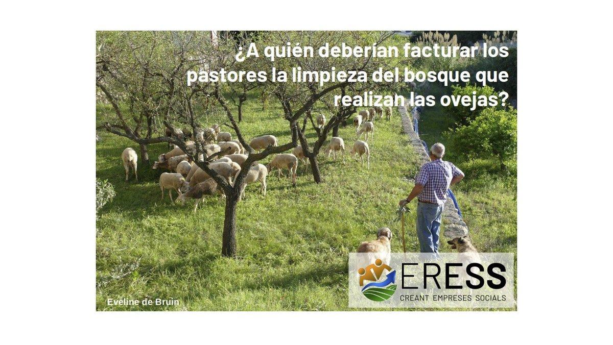 HILO ⬇️   Ayer reflexionamos sobre si los pastores deberían cobrar o no por la limpieza del bosque que realizan las ovejas.  Si así fuera... ¿Quién paga?  #ISeminarioERESS https://t.co/BXyHN0nCuC