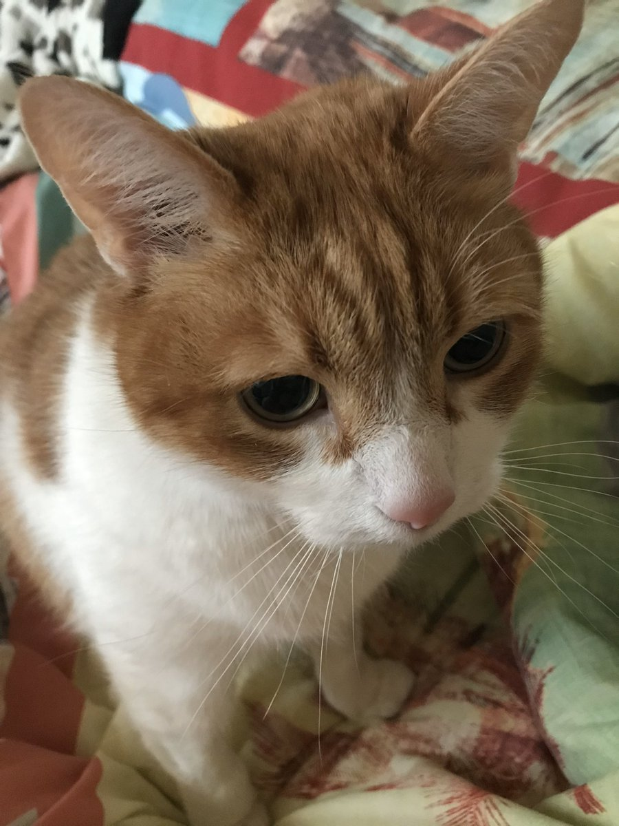 Good morning my beautiful gorgeous fluffy pals Malibu wishing you all a wonderful whiskers Wednesday hope you are all well sending love hugs and cuddles 🤗prayers for sick kitties and hoomans especially Luis and his mom Dianne 🙏look after each other love 💓 you all💞💕 https://t.co/Y5MBBdbfQF