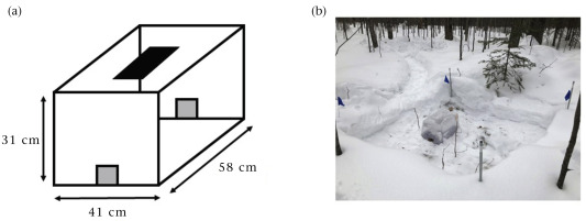Animal Behaviour, June 2020 📰Small mammals use different strategies in winter. @Pete_Guiden & @JohnLOrrock found the white-footed mouse switched from nocturnal to diurnal activity on cold days, while the southern red-backed vole avoided activity entirely https://t.co/5gC86Ka2ES https://t.co/Ub8IY0fTTf
