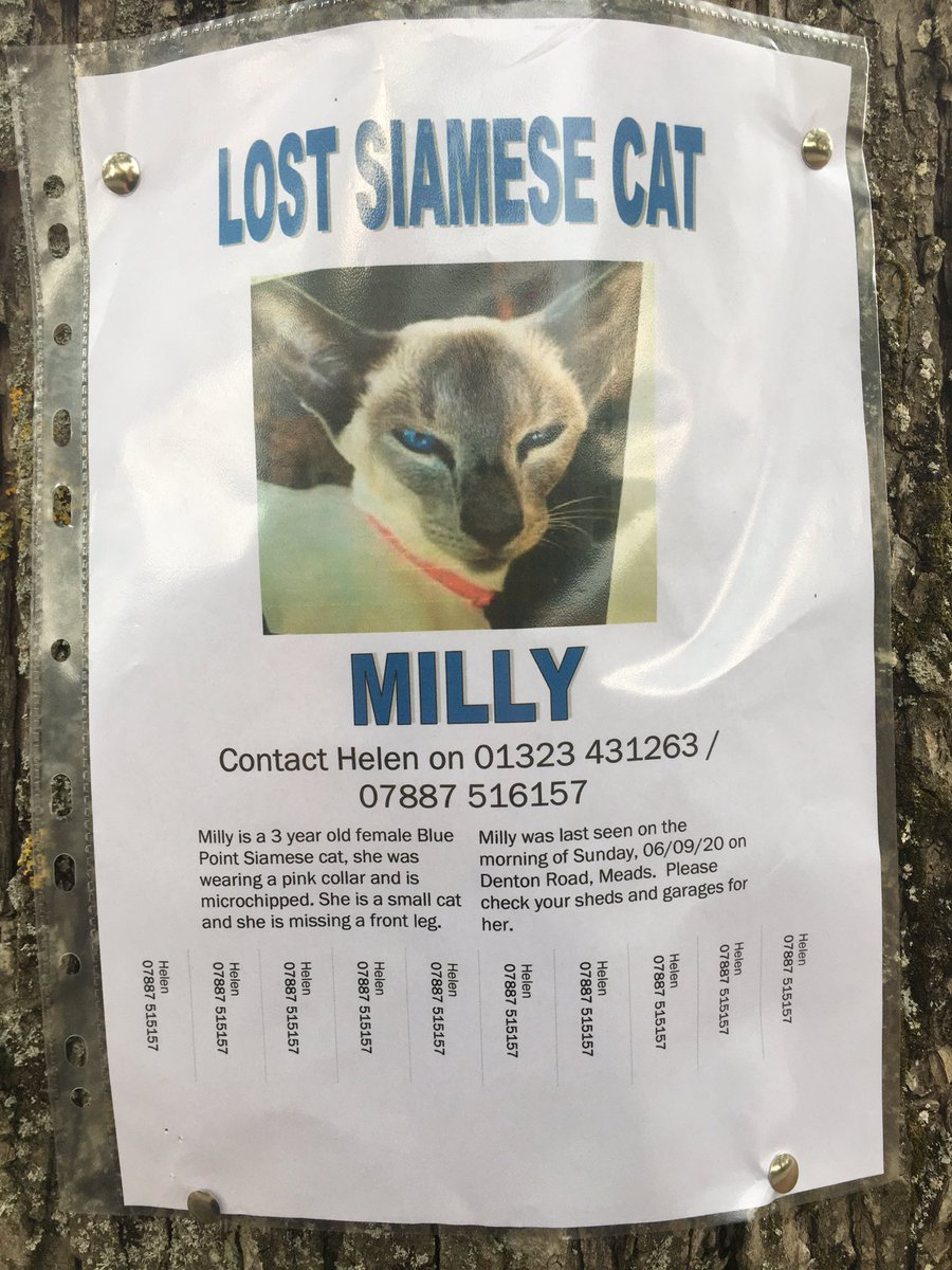 #CatsOfTwitter @AlanDaffern #teambengal Please friends can u retweet to help find this beautiful Siamese?She must be close by and is very distinctive.Suggestions for heartbroken owner most appreciated. @SilkyBengeezers @SuzPilks @ValinVigo @LeoTheBengal @PiandNeko1 🆘Eastbourne🙏🏻 https://t.co/hVCG0oVr3F