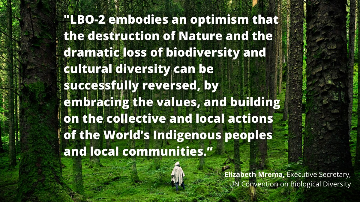 """NEW REPORT: Local Biodiversity Outlooks 2, on #Indigenous Peoples & local communities and ways to restore and revitalise our relationship with #nature  """"#Biodiversity needs the voices of indigenous people"""" –Joji Cariño @ForestPeoplesP  #LBO2 👉 https://t.co/9MoRCUxmEC https://t.co/RzFHeckHkB"""